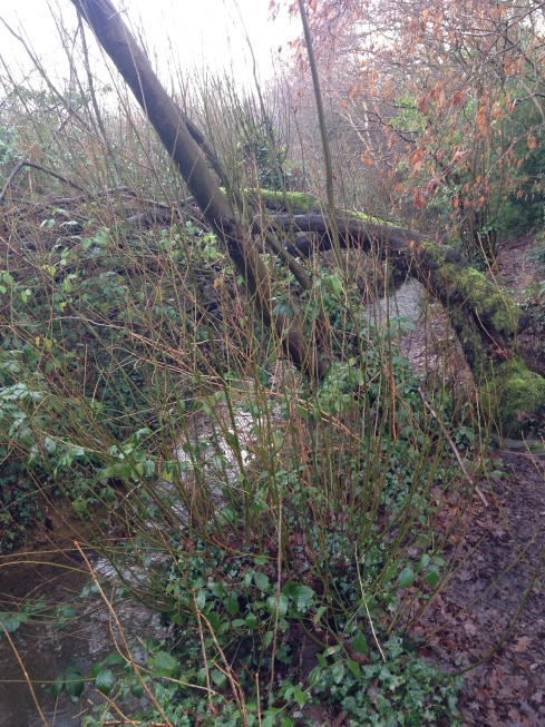 River in Chandlers Ford