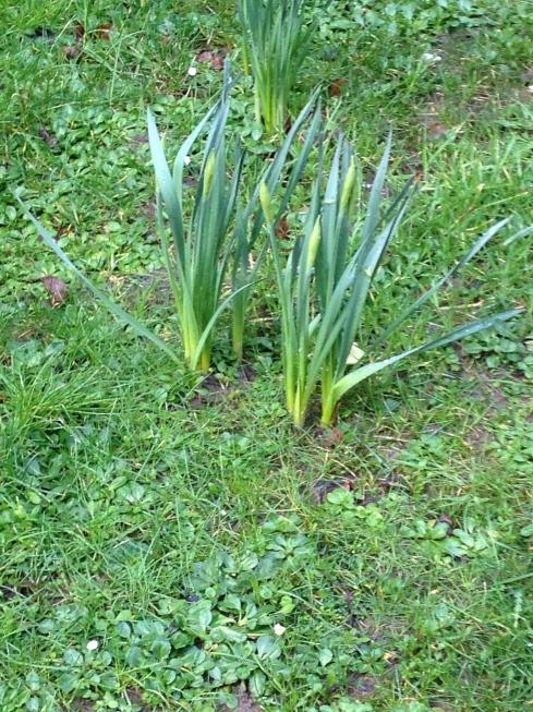 Flower buds always make me think of spring