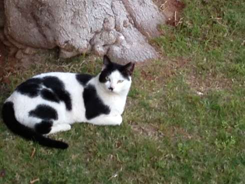This one was definitely a 'Kitler'
